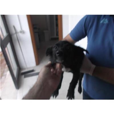 COMUNE DI BENEVENTO - Cane - Microchip 380260042619888